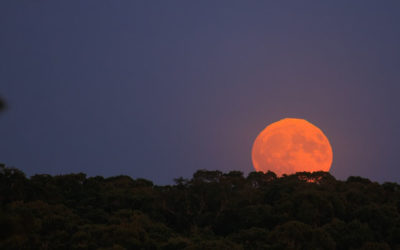LUNA RISING — my poetic tribute to the golden moon