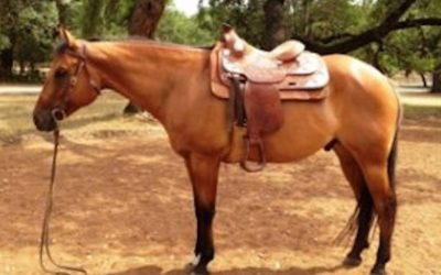 Horsemanship for Writers (and readers)